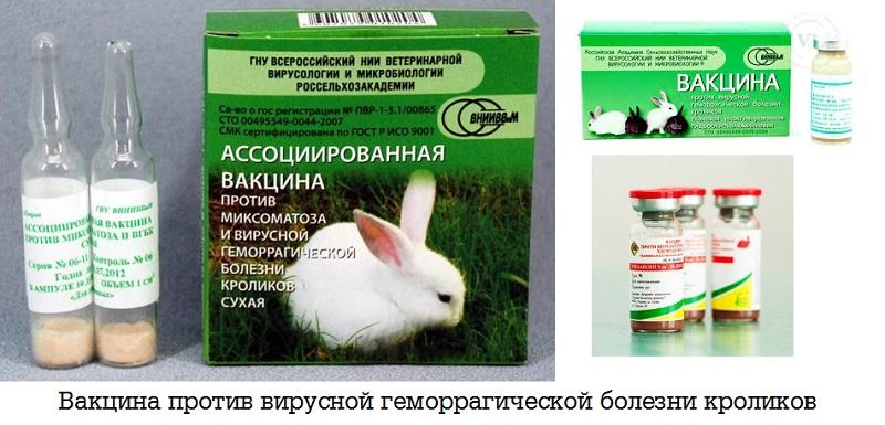 Вакцина против вирусной геморрагической болезни кроликов