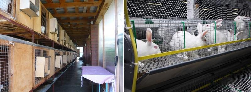 карантин у кроликов