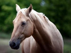 ветпрепараты для лошадей