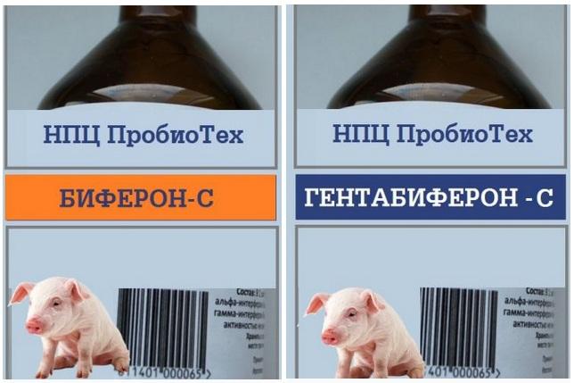 Белорусские биопрепараты для свиней